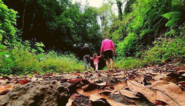 La Palma con niños. El Bosque de los Tilos y cubo de la Galga